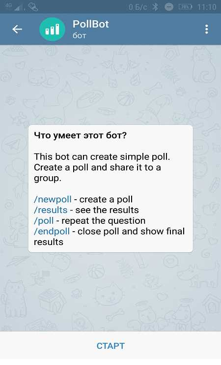 Начало диалога с ботом PollBot